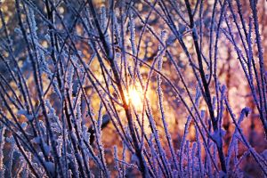 Sunrise in Winter by Elasias