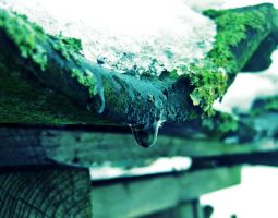 Droplet on a roof tile by Pamba