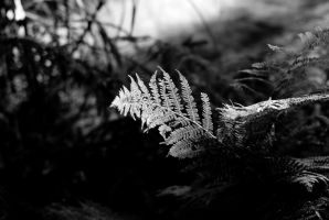 sunlight on plant by macgl