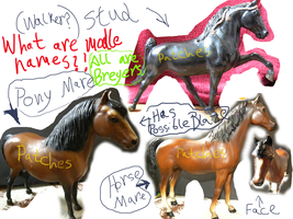 Breyer horses HELP by patchesofheaven74