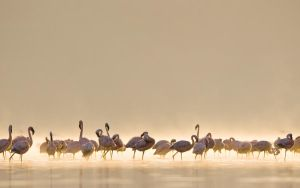 Flamingos by FledMorphine