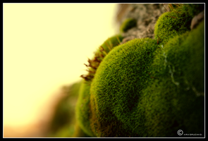 The Moss. by Lapapunk