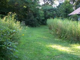 Grassy Path to the Woods1 by RD-Stock