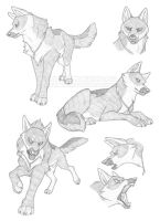 Sketch Sheet: Jawid by FlannMoriath