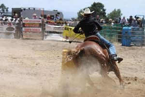 Taupo Rodeo 186 by Sooty-Bunnie
