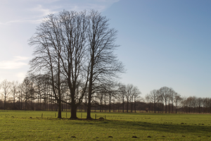 Stock Trees by Annarigby