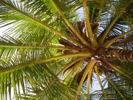 under the palm-tree by iscott