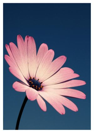 Flower__STOCK__by_sourcow.jpg