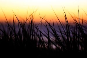 Beach Grass by theDexperience