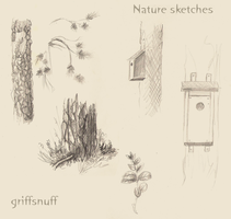 Nature sketches by griffsnuff
