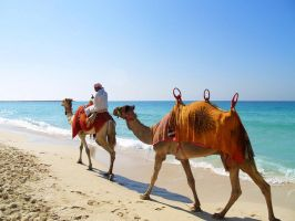 Camels by erce