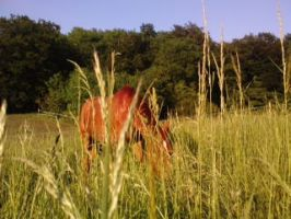Long grass2 by kay115