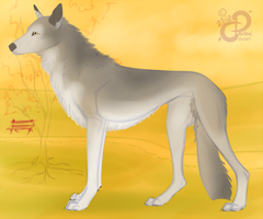A Shepherd Lurcher: Character Concept by PaintedCricket