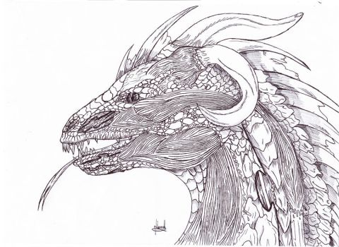 A Dragon by Chyll-Frost