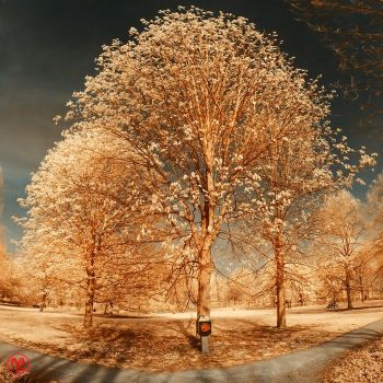 Golden Tree by Boldgraphy