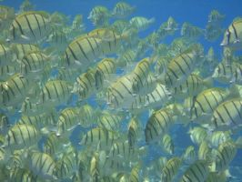 Fishes by BeniAuer