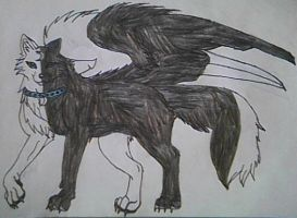 original flying wolf by pandababy28