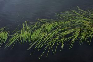 Grass and water by MissUmlaut