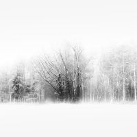 Cold by Weissglut