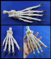 Articulated Back Bear Paw by BluesCuriosities