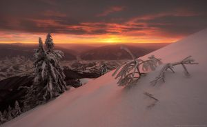 Snowy trees on background of amazing sunset in win by Sergey-Ryzhkov