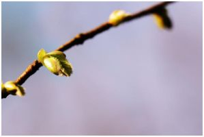 springpop by FMpicturs