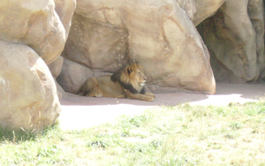 Denver Zoo - The King by VGJustice
