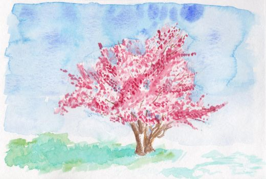 Cherry Blossoms by DParkerEdwards