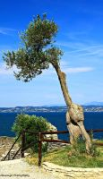 Sirmione - Grotto of Cattulus, Tree by Okavanga