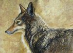 Coyote Alert by HouseofChabrier