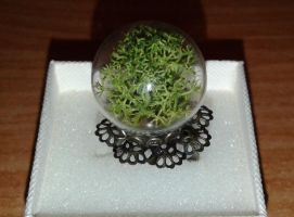 Ring in a glass sphere with the moss by SteamJo