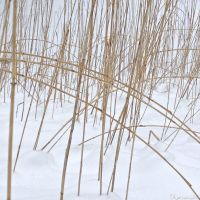Winter Abstract by Kancano