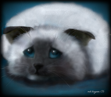 sad cat by mk-kayem
