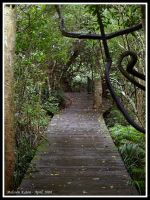 Rainforest Boardwalk by FireflyPhotosAust