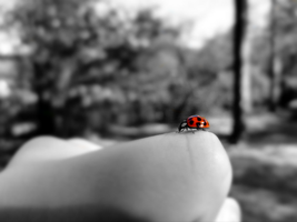 Frances the Ladybug by XxSummitxX
