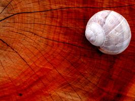 the shell on the wood - 02 by 2BblueBoy