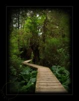 Summer 09 - Path of Trees by OregonArtTeacher