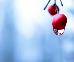 Icy Berry by Tehyoungphotographer