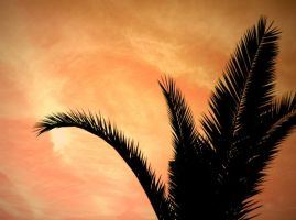 The Red Sky Palm by cekay