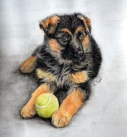 German Shepherd puppy by AnkaAI3