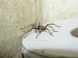Spider on a roll 3218 by Maxine190889