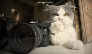 nikon lovers by groovypeople