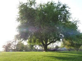 Big Tree in Park2 by MrRstar
