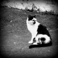 BW Cat by Daionii