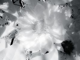 Pure White by Pennes-from-Heaven