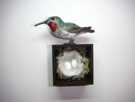Broad-Tailed Hummingbird Shadow Box by Ethereal-Beings