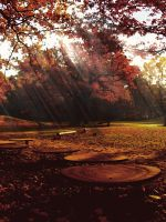 remembering the last autumn by rockmylife