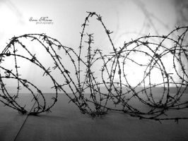 Barbed Wire by Starless10
