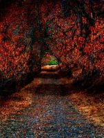 The Pathway by TchaikovskyCF