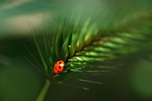 Lady Bug by Resaturatez